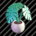 monstera, summer, tropical, plant, nature, pot