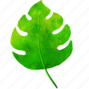 monstera, watercolor, palm, leaf, summer, botanical, tropical