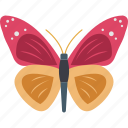 animal, butterfly, insect, moth, summer icon