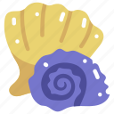 animals, conch, conch outline, conch shell, sea snail, shell, snail