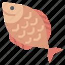animal, animals, aquatic, fish, life, organic, sea