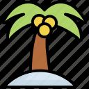 beach, coconut, palm, sea, summer, tree, vacation