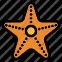 starfish, sea, star, animal, wild, ocean, summer
