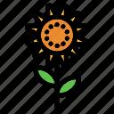 sunflower, flower, nature, plant, floral, garden, summer