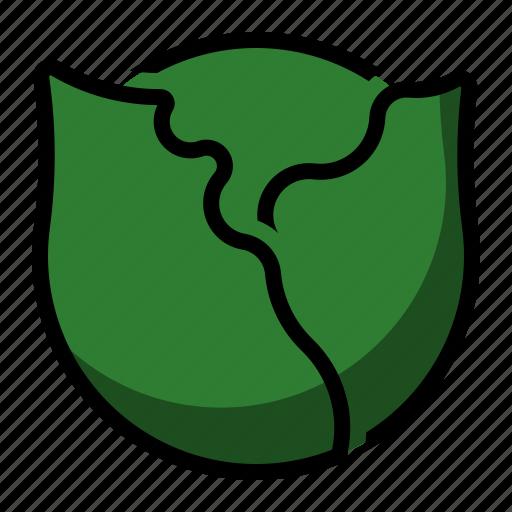 cabbage, food, supermarket, vegetable icon