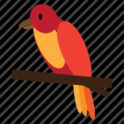 animal, bird, parrot, pet, red, sweet icon