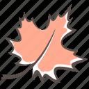 leaf, maple leaf, maple, fall icon