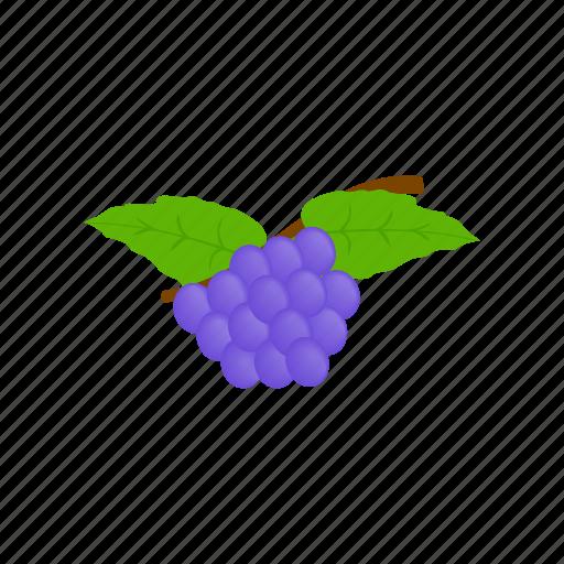 berry, fruit, grape, healthy, isometric, ripe, vine icon
