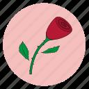 fleur, flower, girly, pink, rose