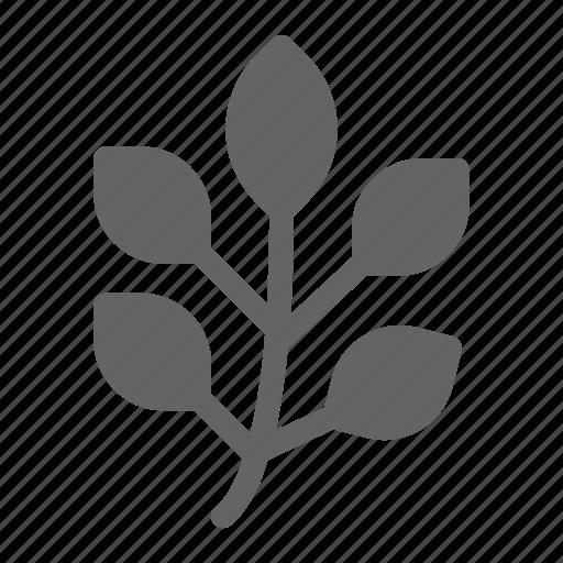 herb, ingredient, leaf, natural icon