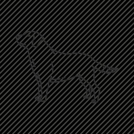 canidae, canine, dog, doggy, golden retriever, labrador, medium land mammal icon