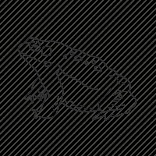 bufonidae, frog, ribbit, small amphibian, toad icon