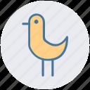 bird, gull, ocean, sea, sea bird, seagull