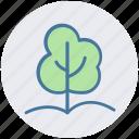 conifer tree, fir tree, forest, pine tree, tree, yard tree icon