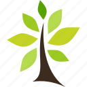 flora, nature, plant, tree icon
