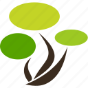 flora, nature, plant, tree