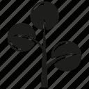 botany, ecology, forset, growth, nature, plant, tree icon