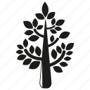 botany, forset, growth, leaf, nature, plant, tree icon