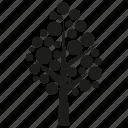 botany, ecology, forset, growth, nature, plant, tree