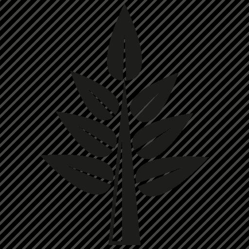 botany, forset, growth, leaf, nature, plant, tree icon