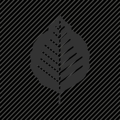 forest, leaf, nature, park, plant, poplar, tree icon