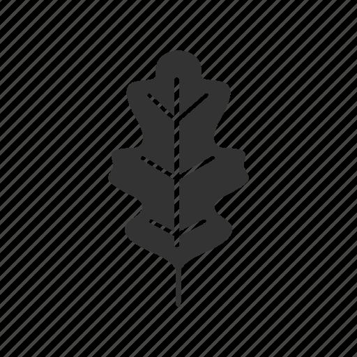 forest, leaf, nature, oak, oakleaf, plant, tree icon