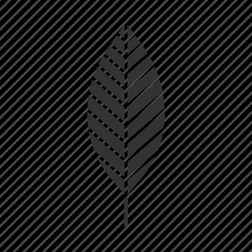 foliage, forest, leaf, park, plant, tree, walnut icon