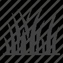 plant, lawn, grass