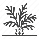 palm, plant, tree icon