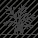 tree, palm, plant