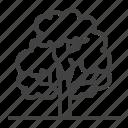 forest, tree, deciduous, oak, plant