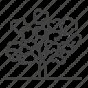 blooming, flowering, sakura, tree icon