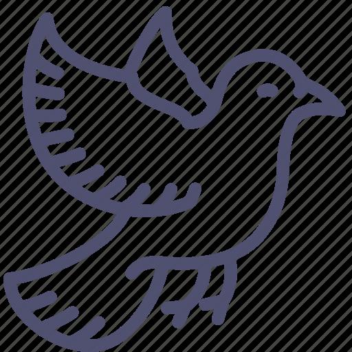 animal, bird, dove, fly, pigeon icon