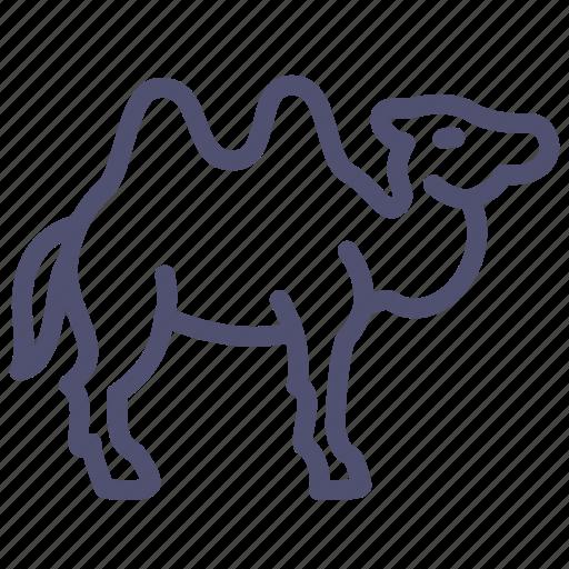animal, camel, camelus, desert, hump, mammal icon