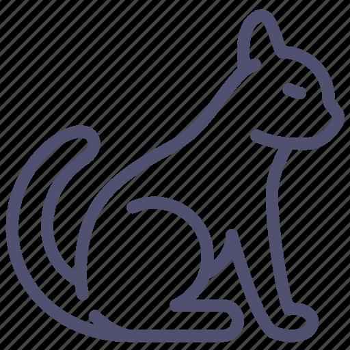 animal, cat, kitty, pussycat, tomcat icon