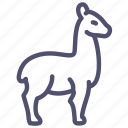 wool, lama, llama, animal