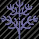 dill, fennel, food, parsley icon