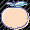 food, fruit, mandarine, organic