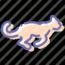animal, cheetah, fast, leopard icon