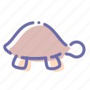 animal, slow, turtle