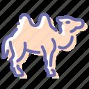 camel, camelus, desert, mammal