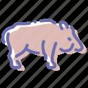 aper, boar, pig, wild icon