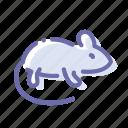 micky, mouse, rat, rodent