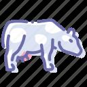 beef, cow, milk, udder
