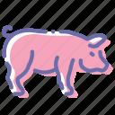 fat, fatty, pig icon