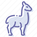 animal, lama, llama, wool