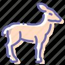 deer, doe, gazelle, hind