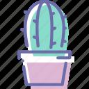 cactus, decoration, plant, pot
