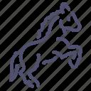 horse, mare, prance, stallion