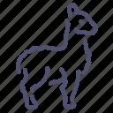 llama, lama, animal, wool